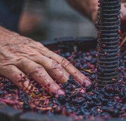 Produits cosmétiques et mentions traditionnelles viticoles