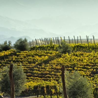 La reconnaissance d'une certification végane dans le domaine viticole